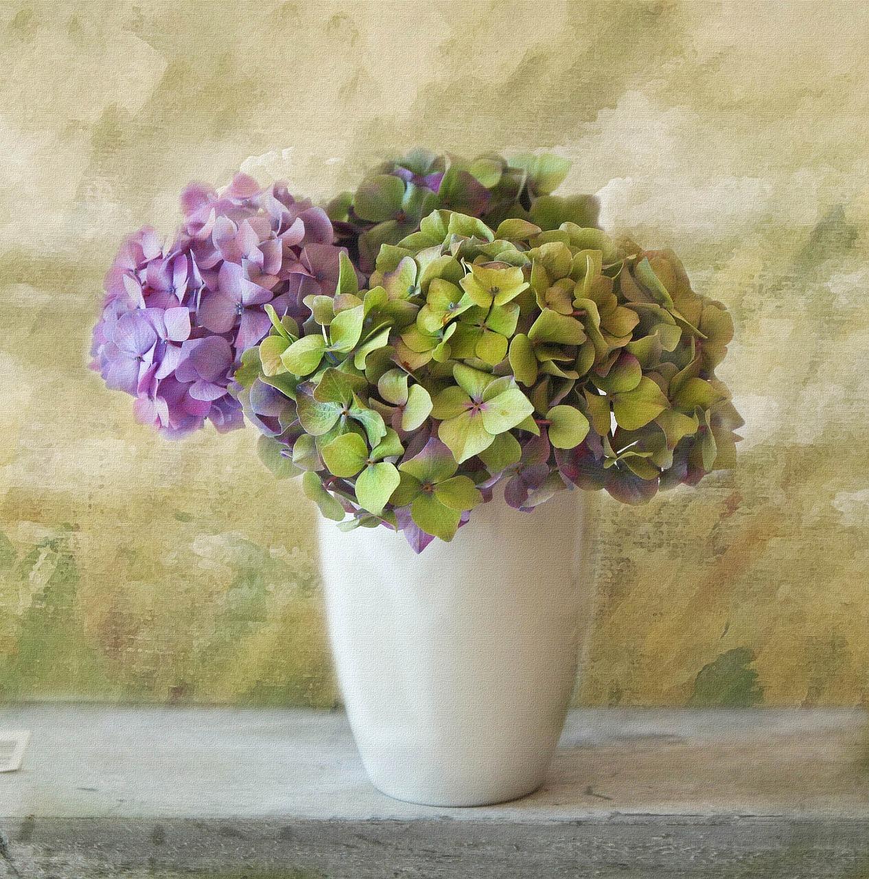 Hortensja bukietowa uprawa i odmiany: wszystko, co musisz wiedzieć!