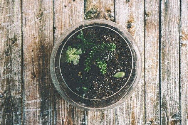 Jakie rośliny oczyszczające powietrze wybrać do swojego wnętrza?